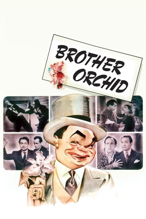 Brother Orchid