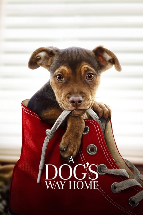 Watch A Dog's Way Home (2019) HD Movie Streaming