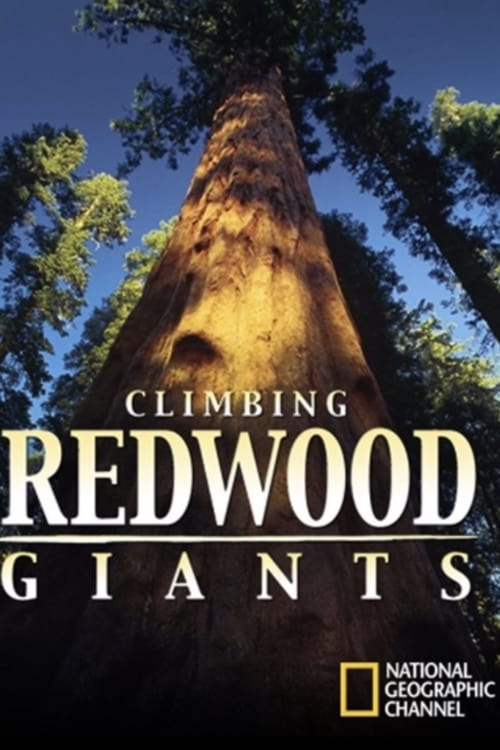 Climbing Redwood Giants