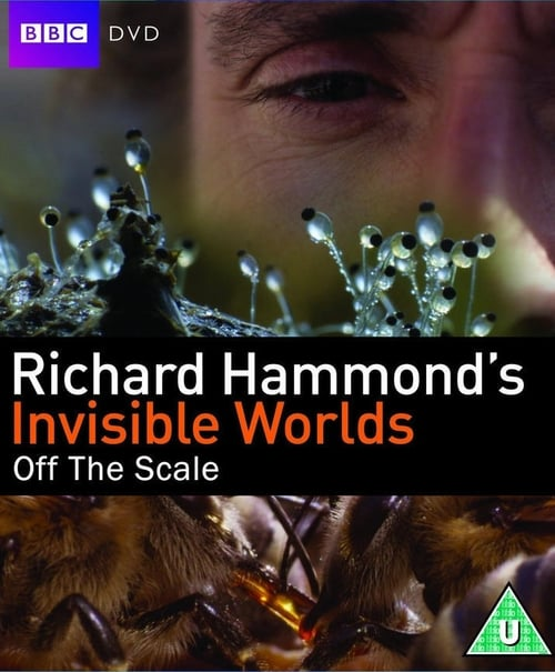 Largescale poster for Invisible Worlds