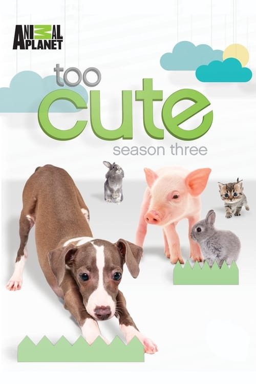 Watch Too Cute Season 2 Episode 14 Full Movie Download