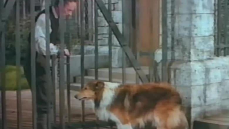 Challenge to Lassie koko elokuva ilmaiseksi
