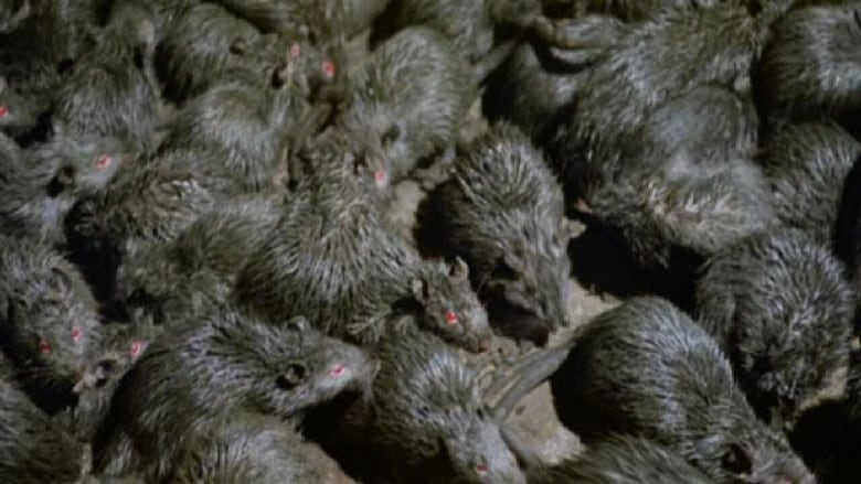 Le Film Rats Vostfr