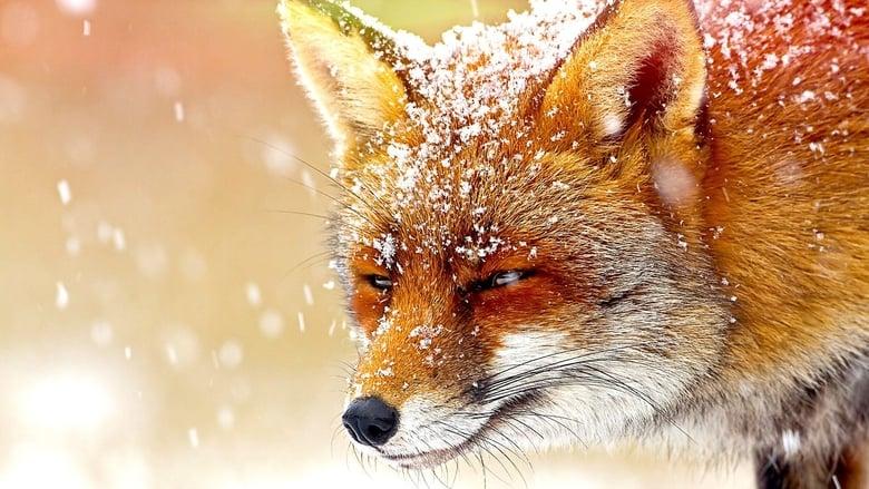 The Wonder of Animals