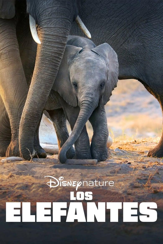 ver Los elefantes pelicula completa en español online