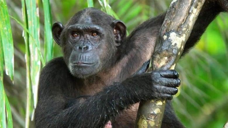 Congo sauvage