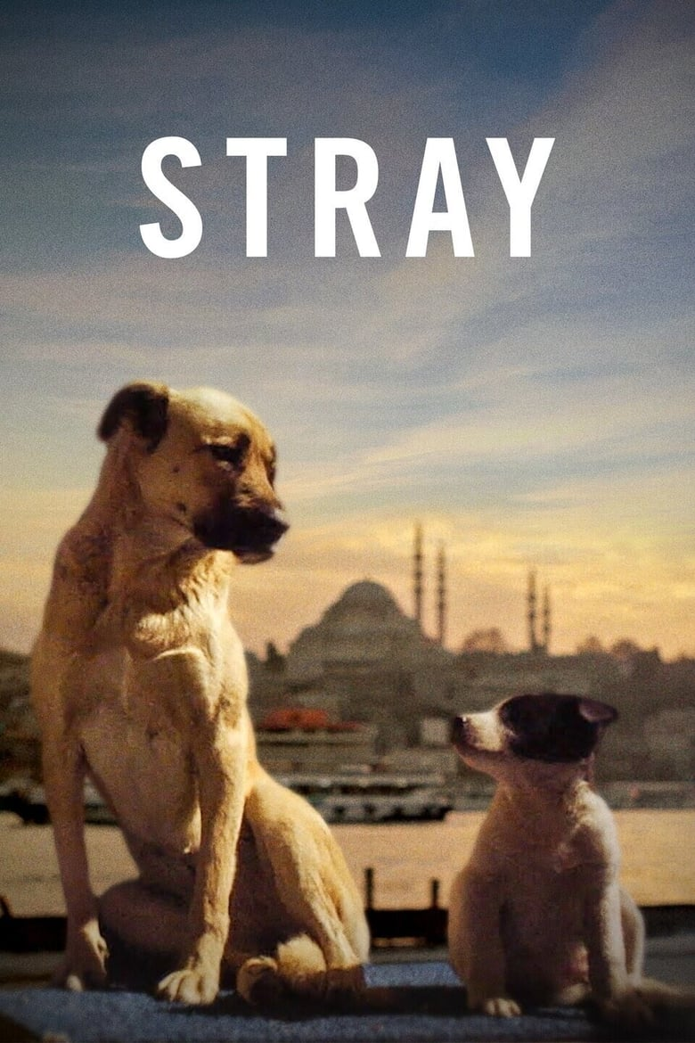 Theatrical poster for Stray