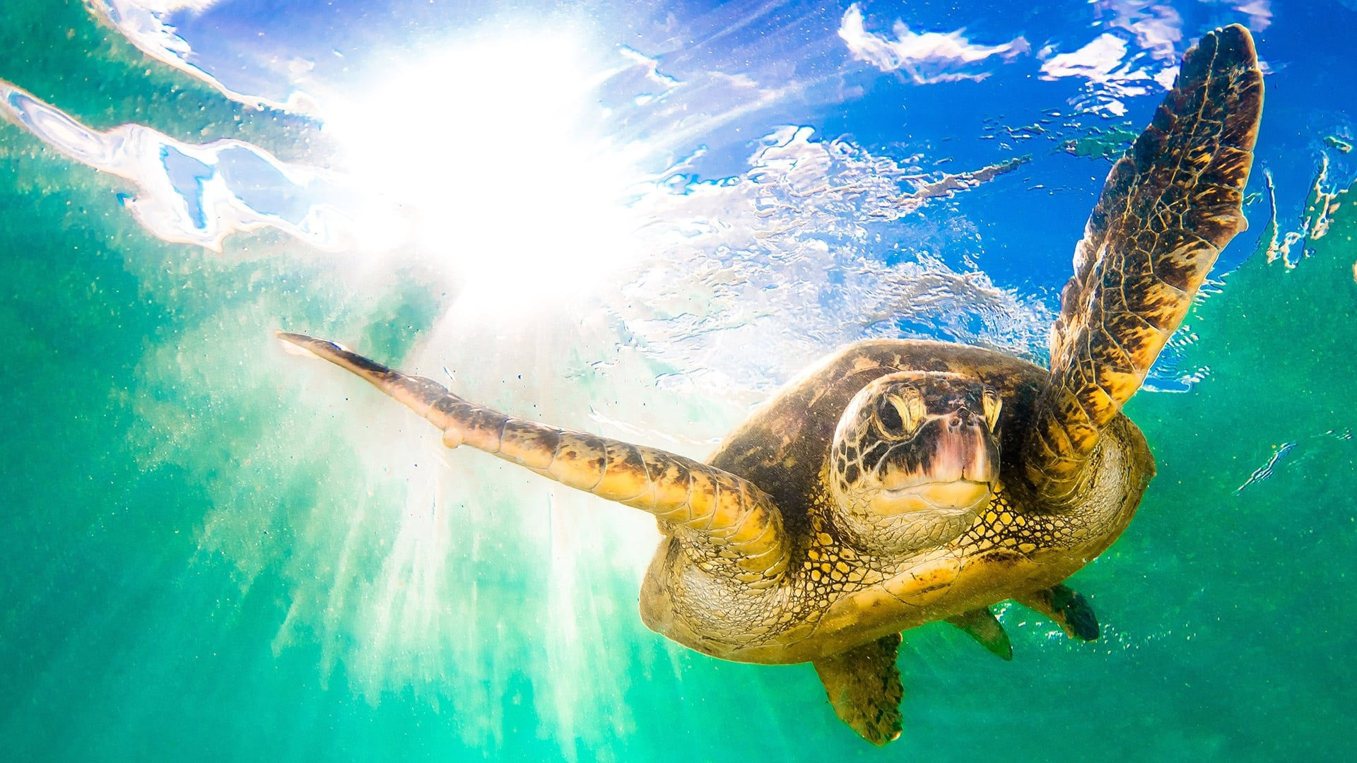Download Earths.Tropical.Islands.S01E03.Hawaii.1080p.HDTV