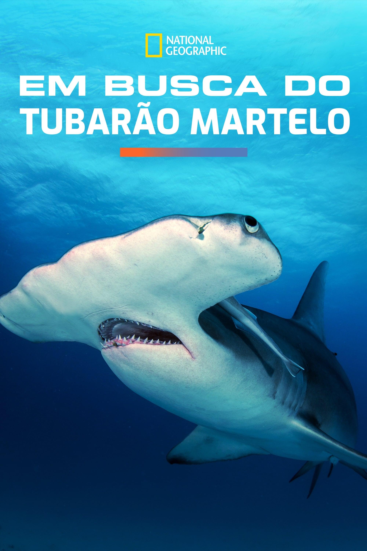 Em Busca do Tubarão Martelo Legendado