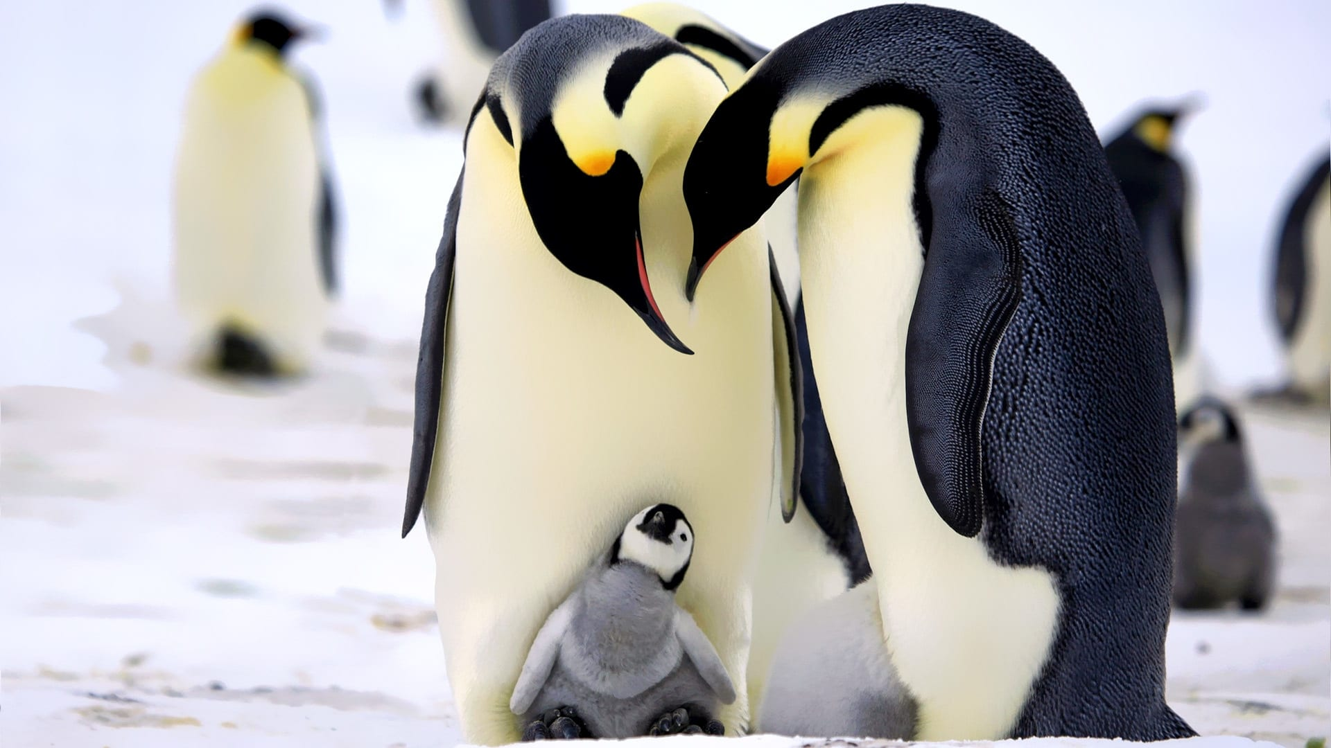 twins-sex-large-pictures-of-babes-penguins