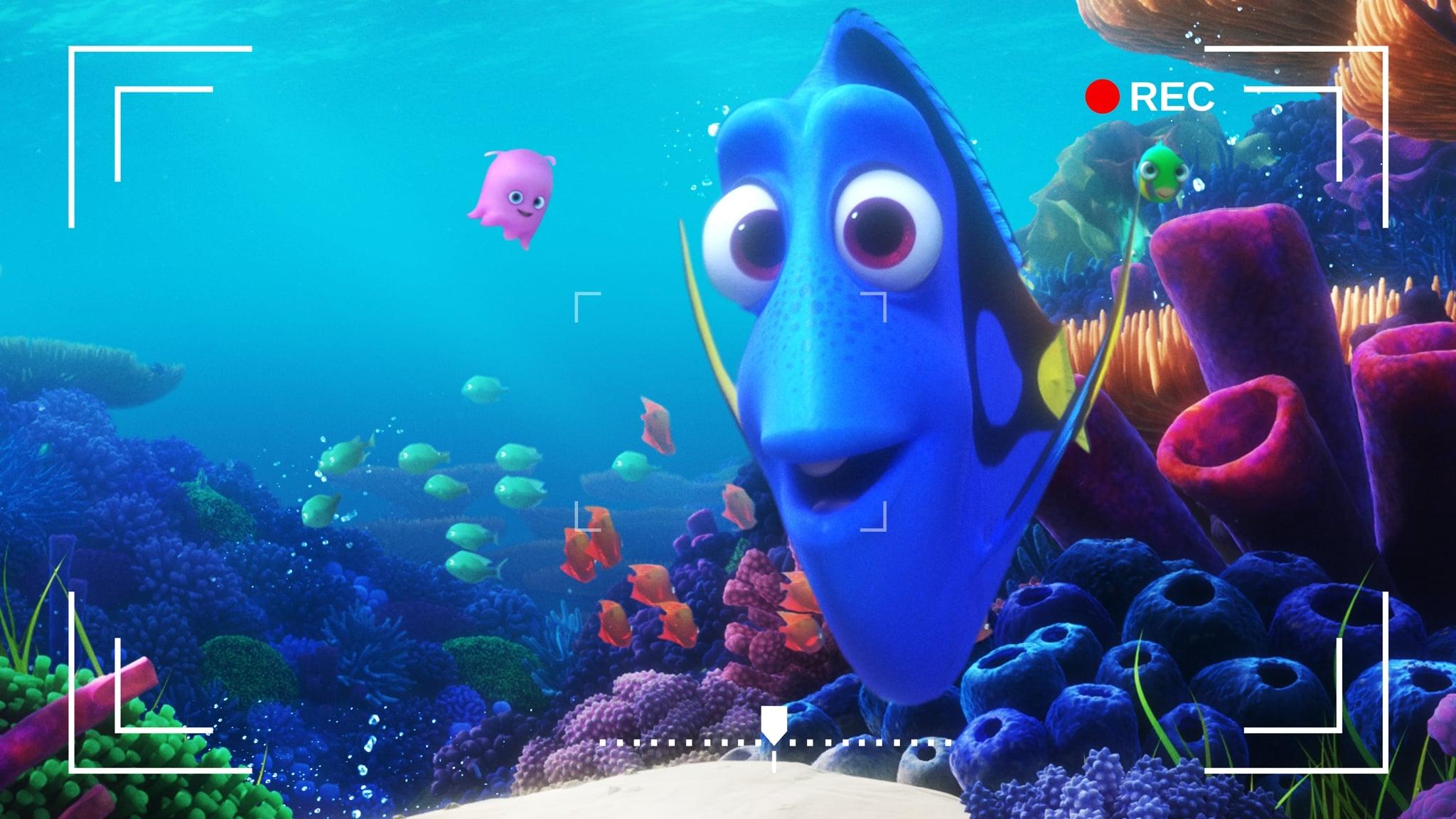 Dory's Reef Cam (2020)