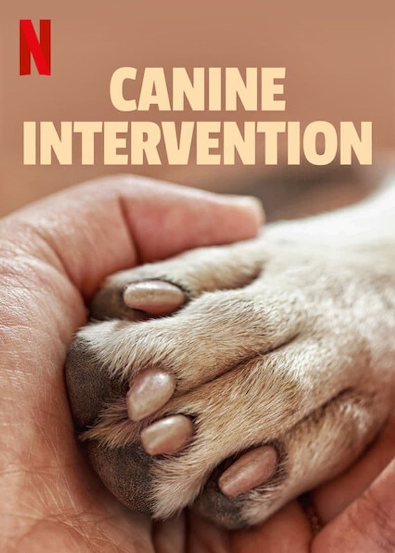 Canine Intervention TV Shows About Rain