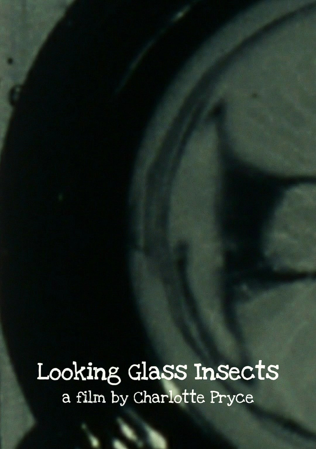 Looking Glass Insects