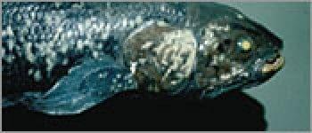 NOVA - Season 30 Episode 3 : Lost Roman Treasure