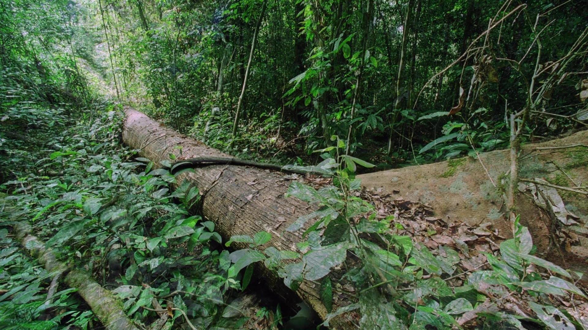 Planet earth s01e08 jungles online subtitrat hd vezi - Plante jungle ...