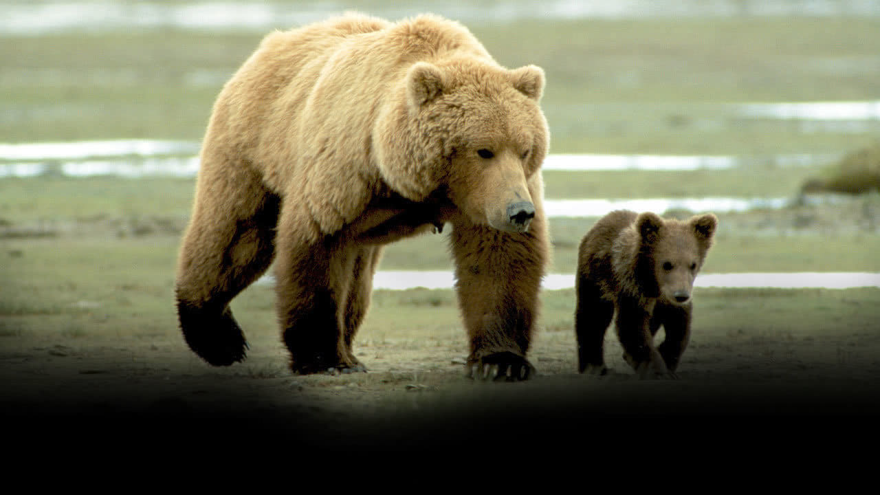 grizzly man Grizzly man is an oscar winning documentary directed by werner herzog it is about the life of timothy treadwell, who spent thirteen years filming grizzly bears in.