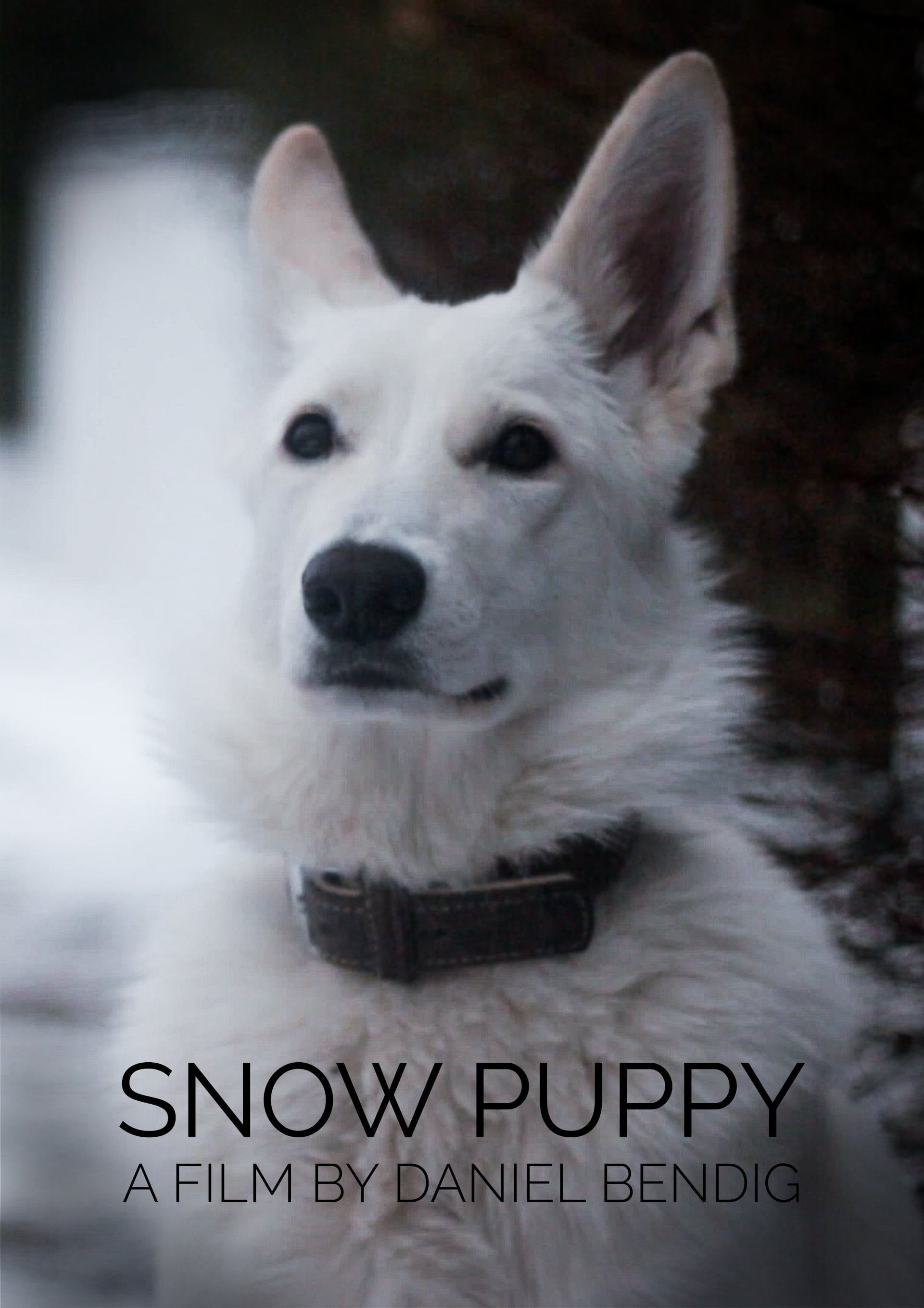 Ver Snow Puppy Online HD Español ()