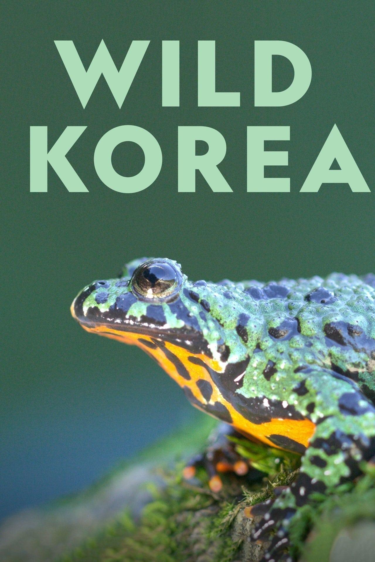 Wild Korea TV Shows About Wildlife