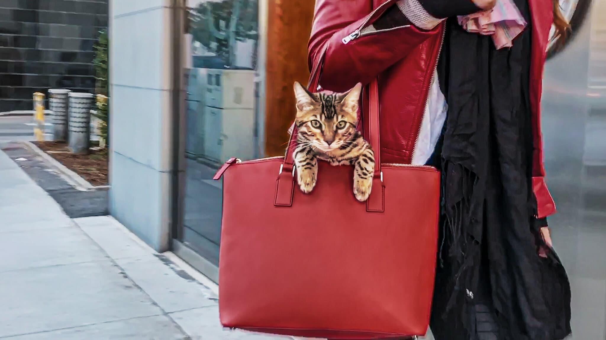 Gente de gatos