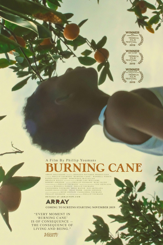 assistir filme burning cane
