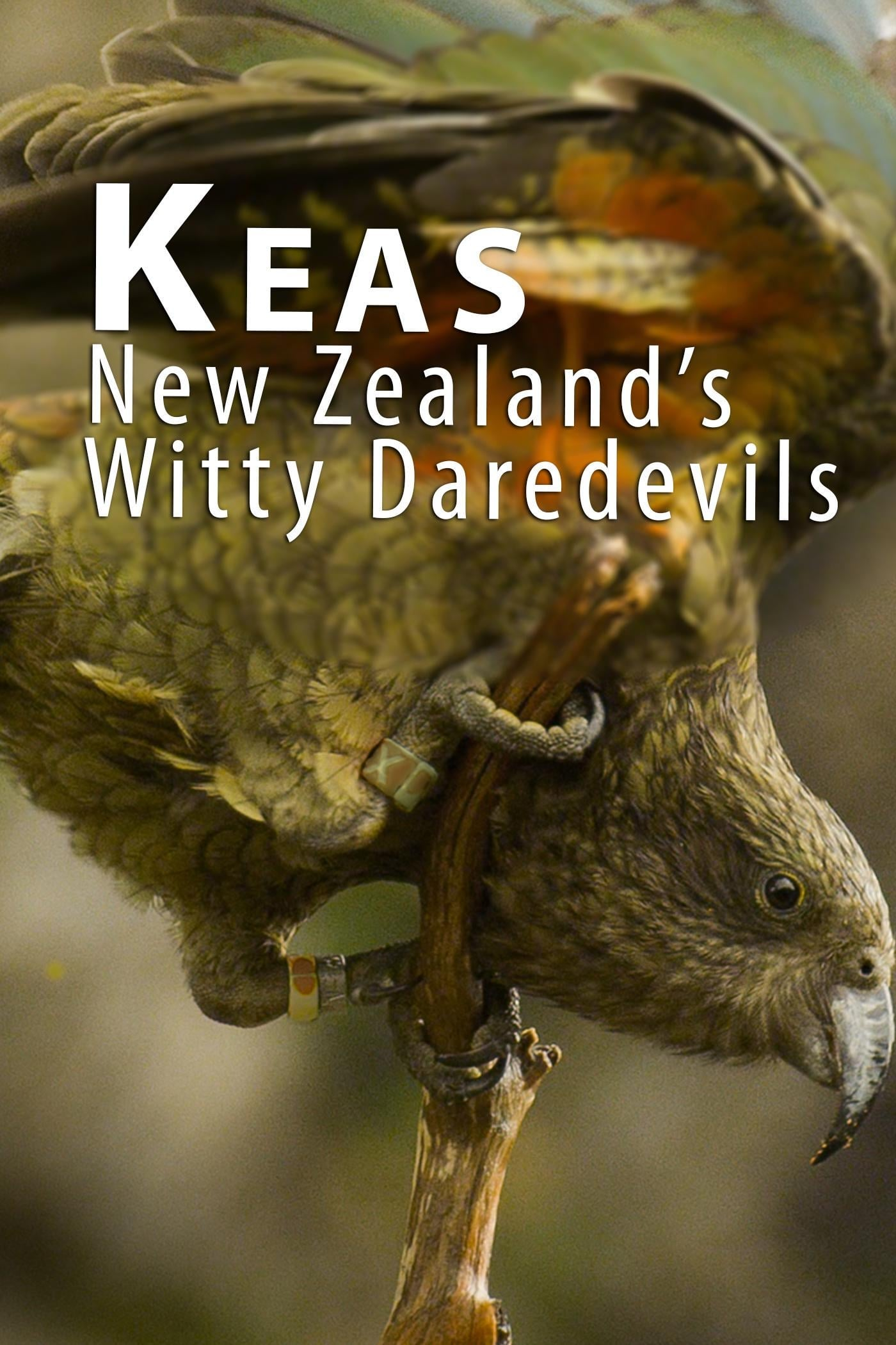 Ver Keas: New Zealand's Witty Daredevils Online HD Español ()