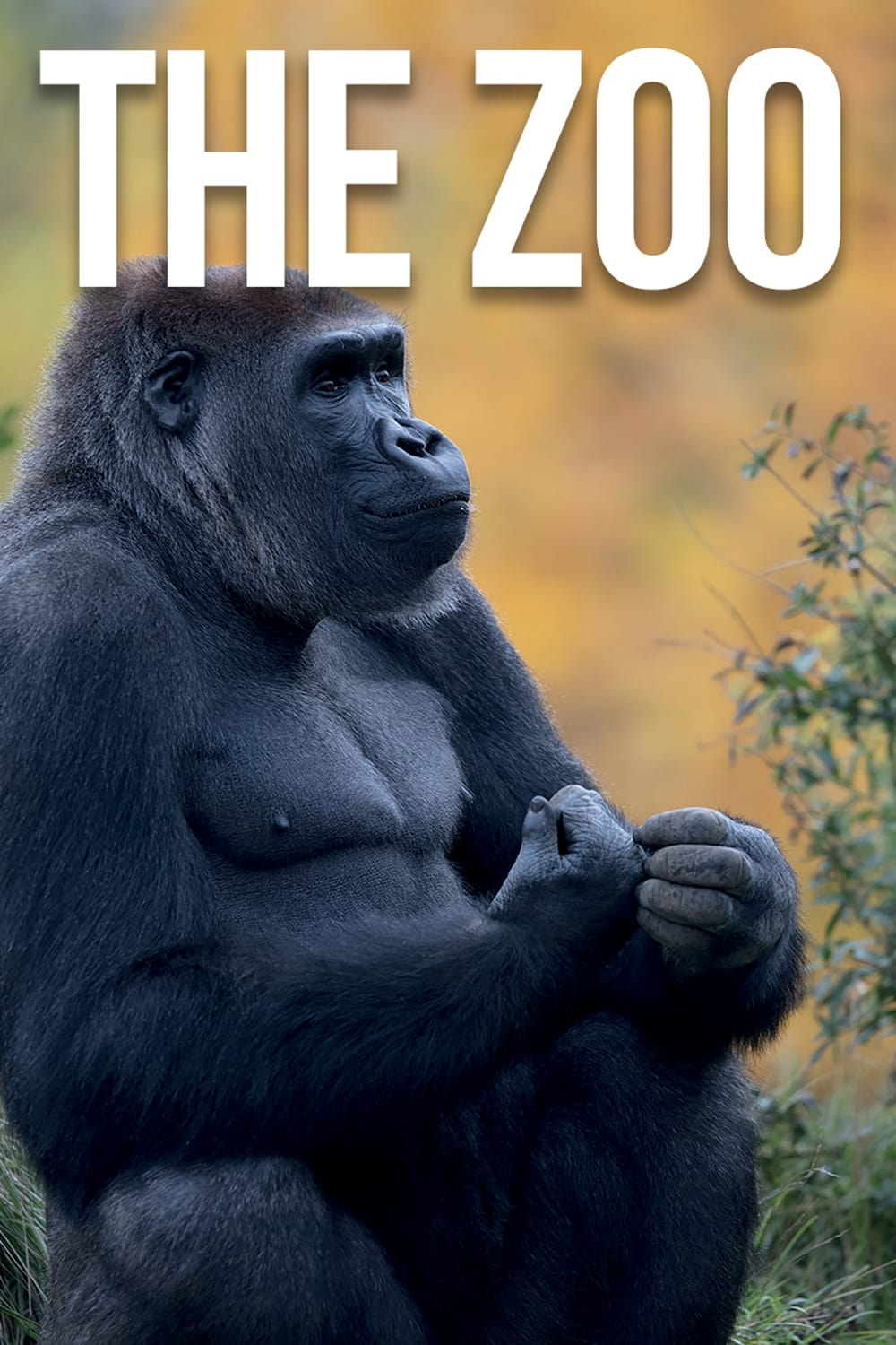 The Zoo on FREECABLE TV