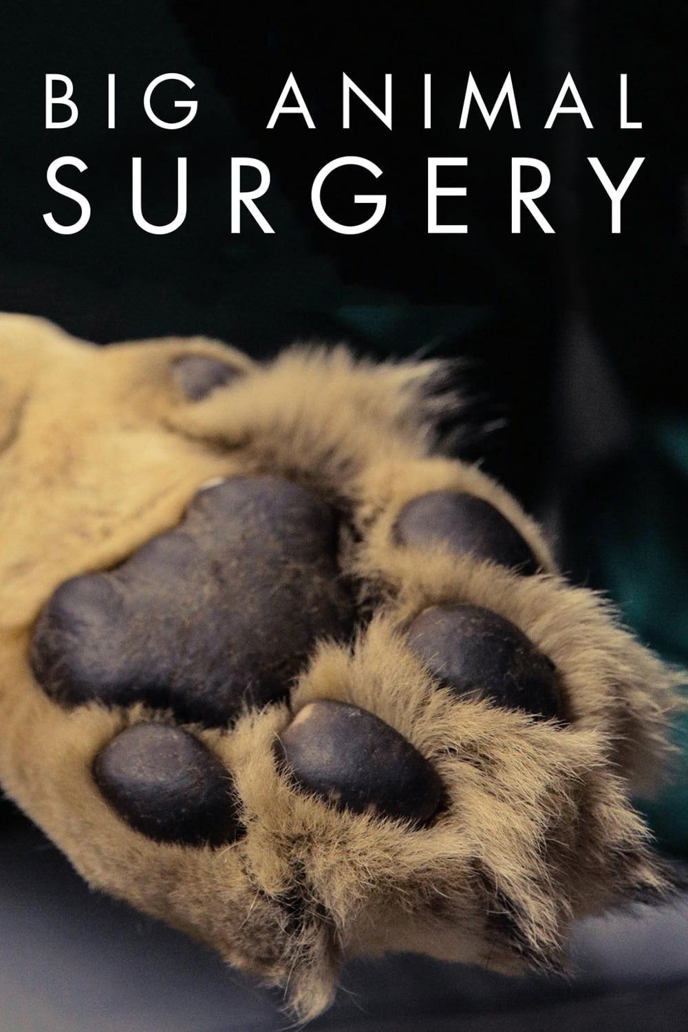 Big Animal Surgery TV Shows About Nature Documentary