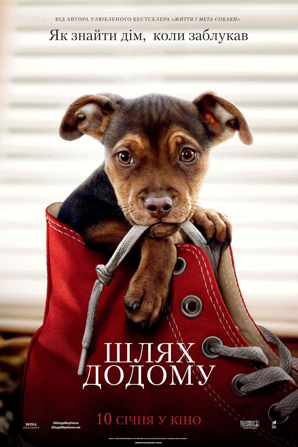 Poster and image movie Film A Dog's Way Home - Belos kelione namo -  2019