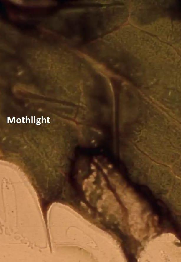 Mothlight (1963)