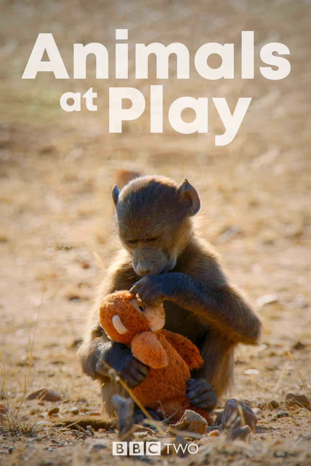 Animals at Play TV Shows About Nature
