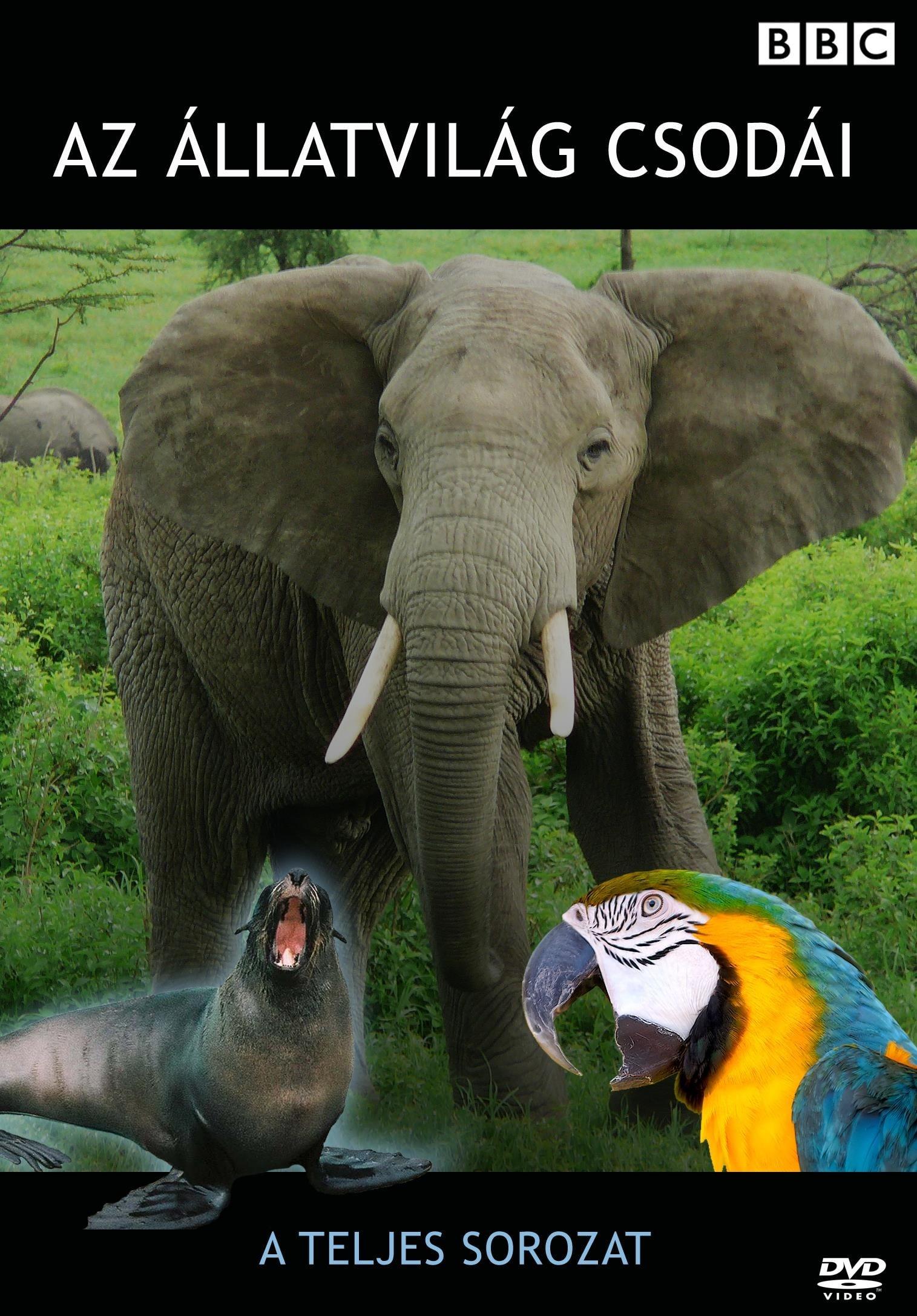 Extraordinary Animals (2008)