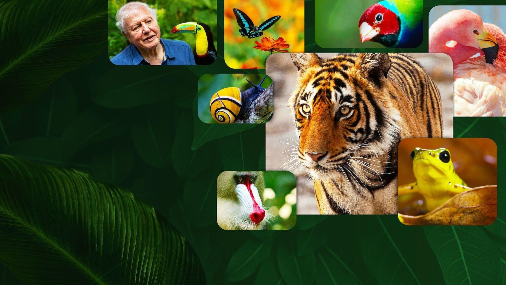 La vida a color con David Attenborough
