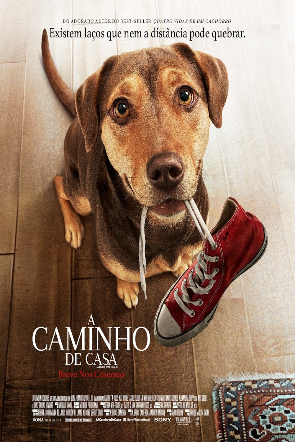 A Caminho de Casa (2019) Torrent - BluRay Ultra HD Dual Áudio 5.1 [Full 1080p] Download