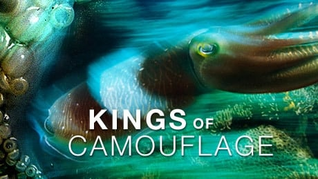 NOVA Season 34 :Episode 10  Kings of Camouflage
