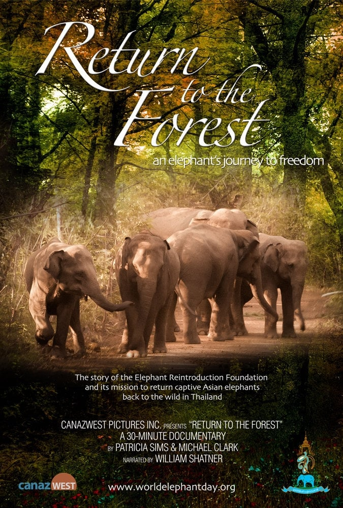 watch Return to the Forest 2013 Stream online free