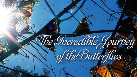 NOVA Season 36 :Episode 10  The Incredible Journey of the Butterflies