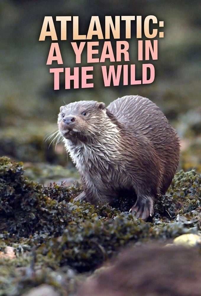 Atlantic: A Year in the Wild (2020)