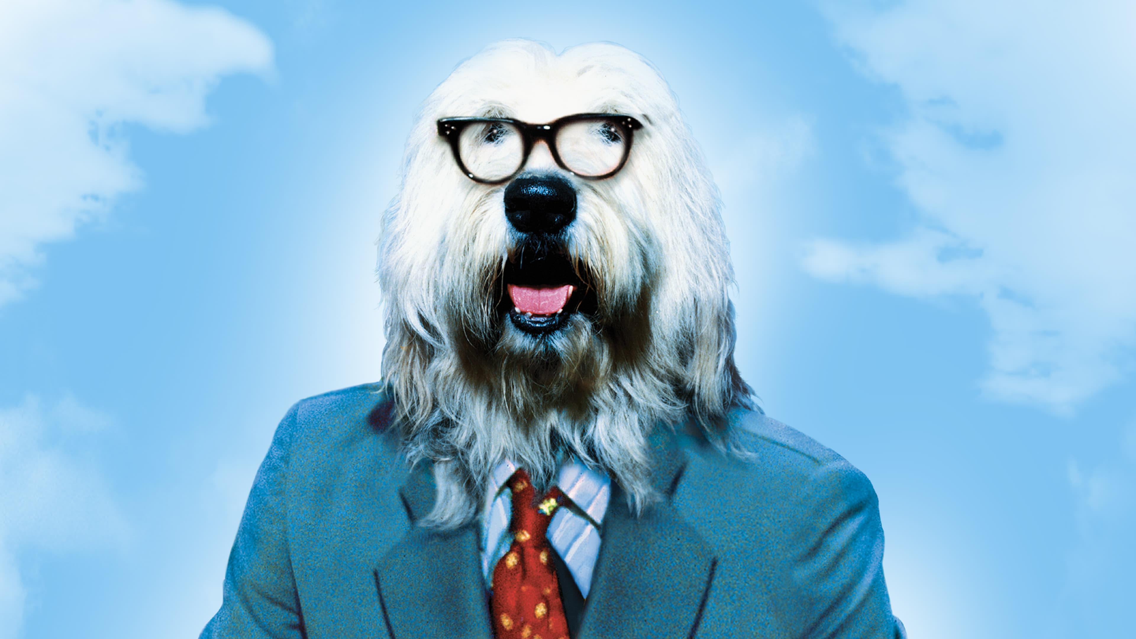 Felpudo, o Cachorro Promotor Dublado Online