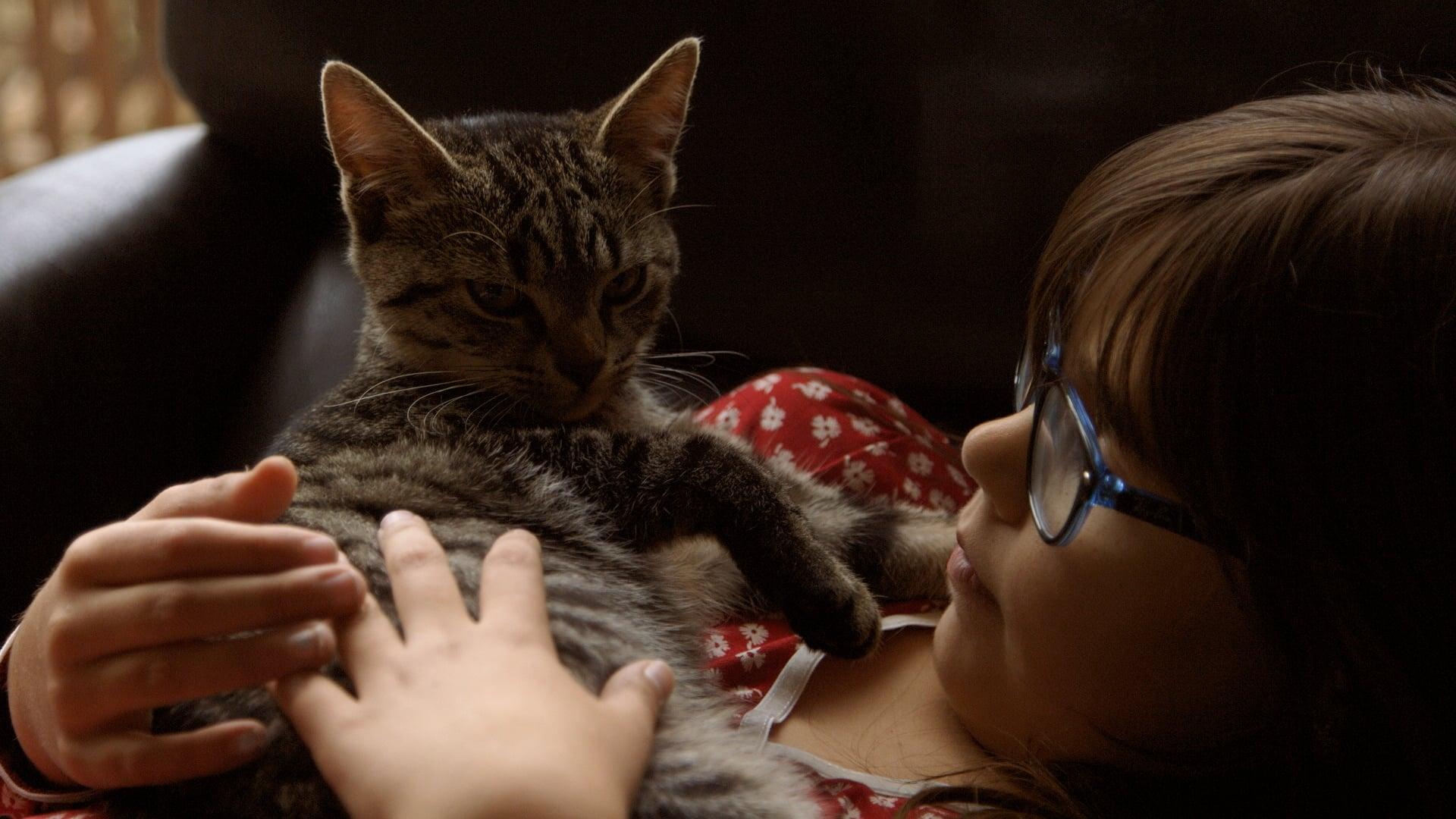 Cat Stories (2019)
