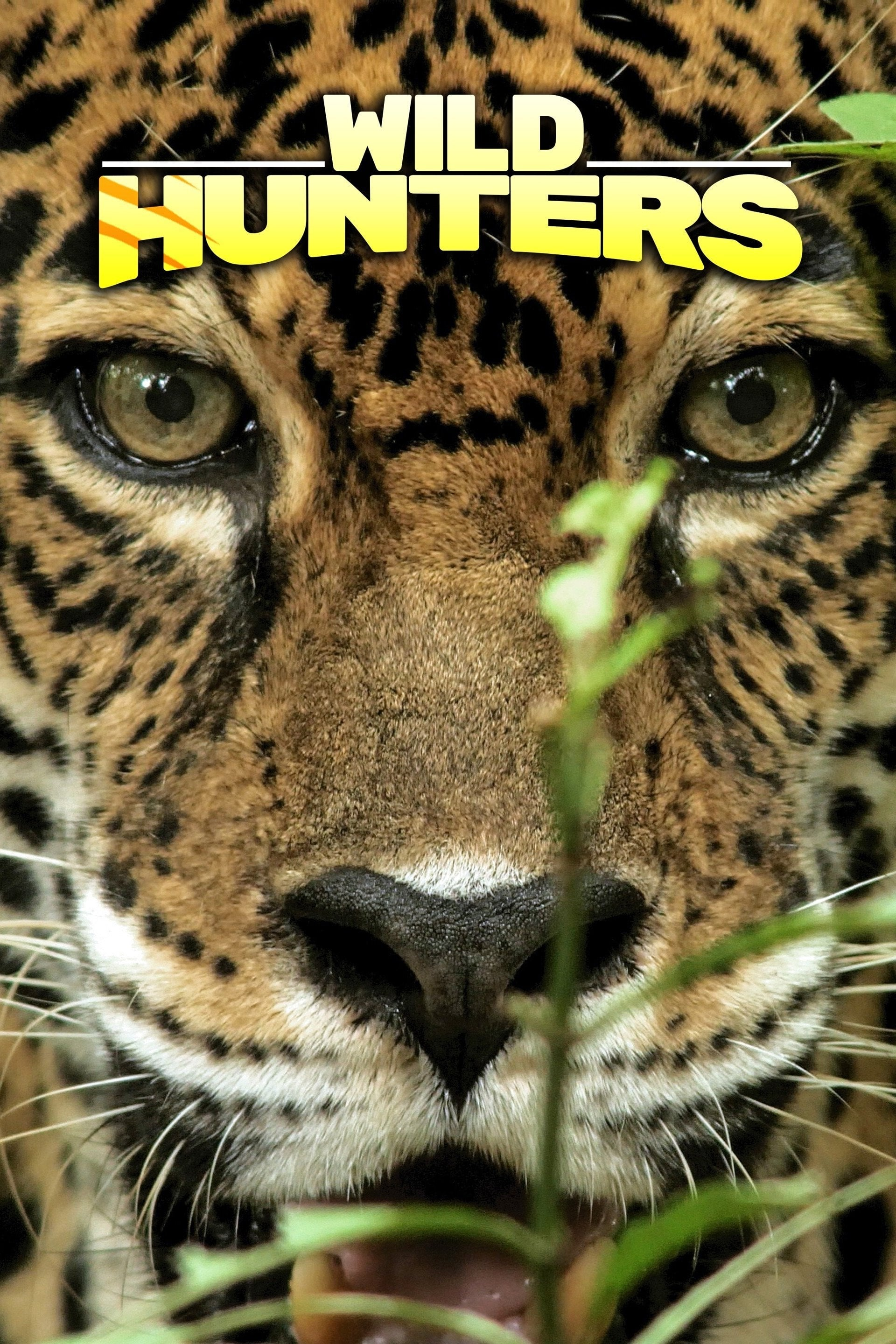 Wild Hunters TV Shows About Nature