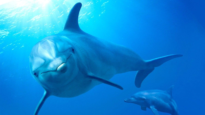 DESCARGAR Delfines, la vida en el arrecife (2018) pelicula completa en español latino Gratis