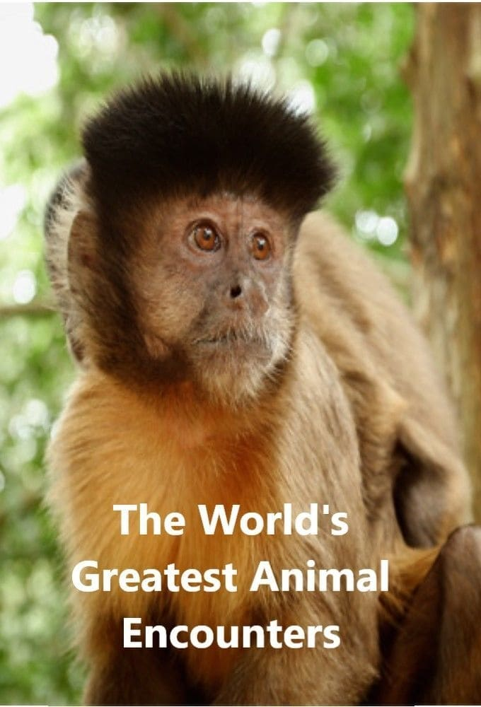 World's Greatest Animal Encounters TV Shows About Wildlife