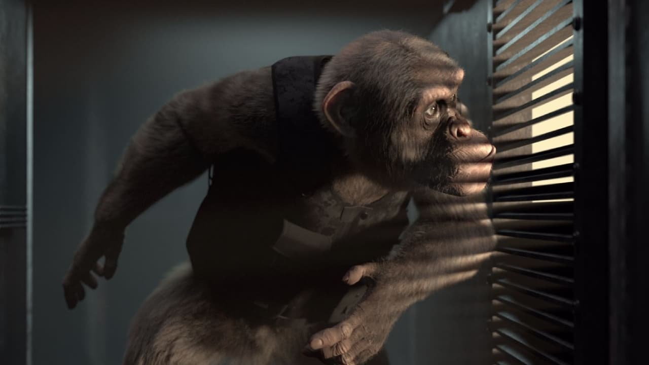 C.I.Ape (2021) Streaming Full