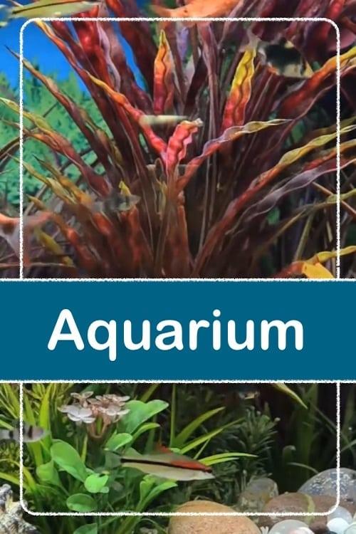 Relaxing Aquarium