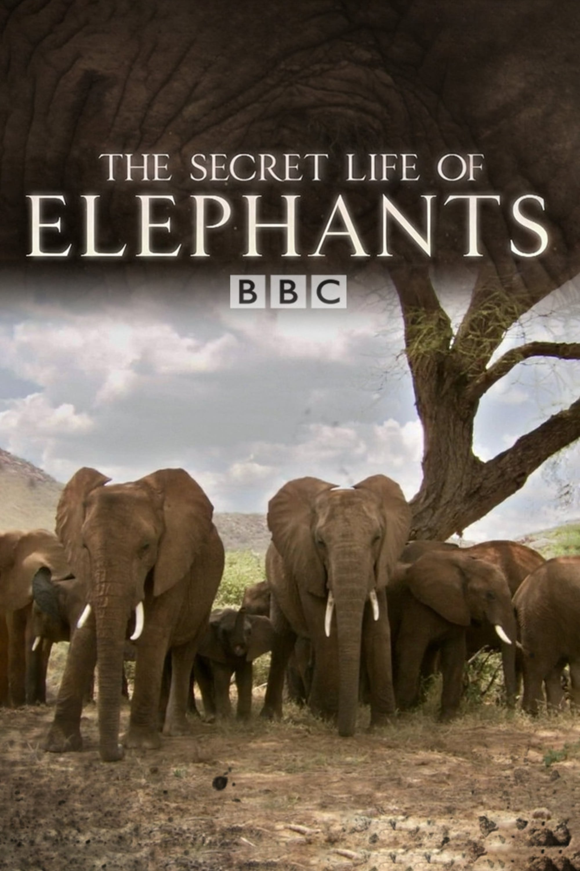 The Secret Life of Elephants (2009)