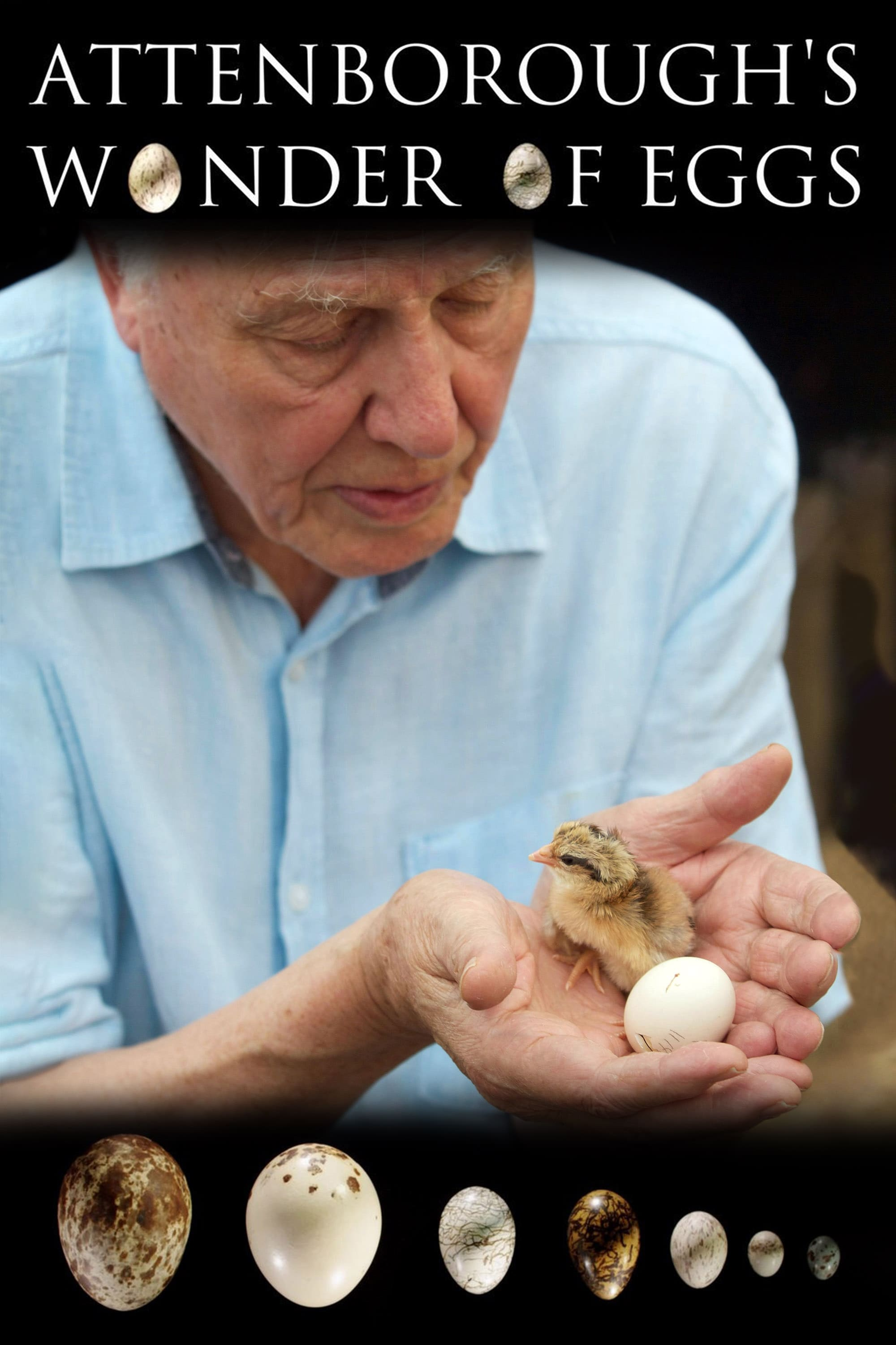 Ver Attenborough's Wonder of Eggs Online HD Español ()