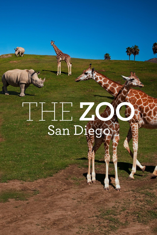 The Zoo: San Diego