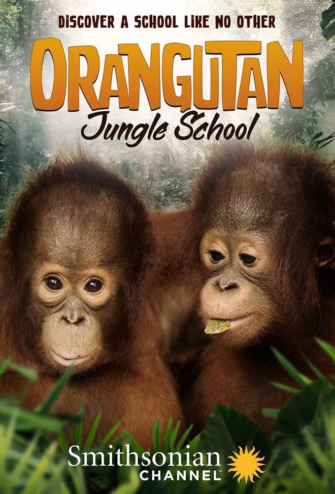 Orangutan Jungle School TV Shows About Jungle