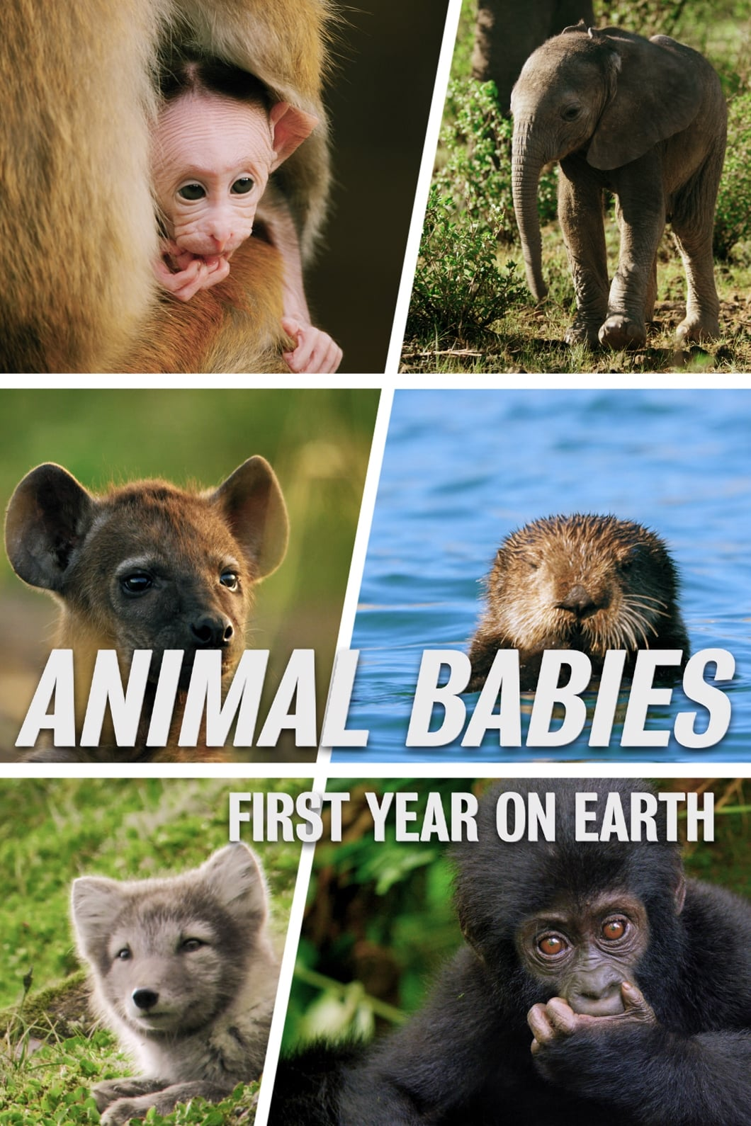 Animal Babies: First Year On Earth (2019)