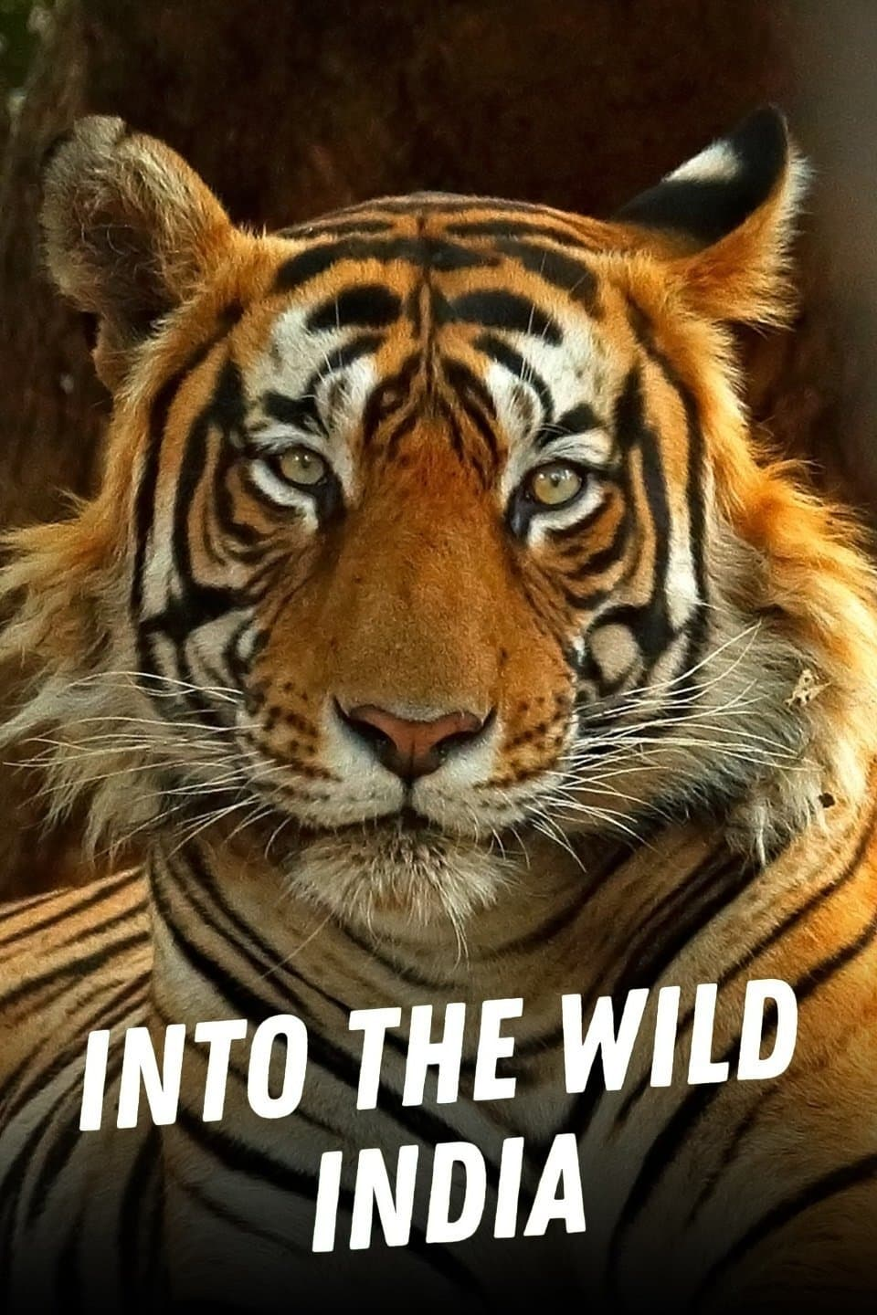 Into the Wild: India TV Shows About Animal
